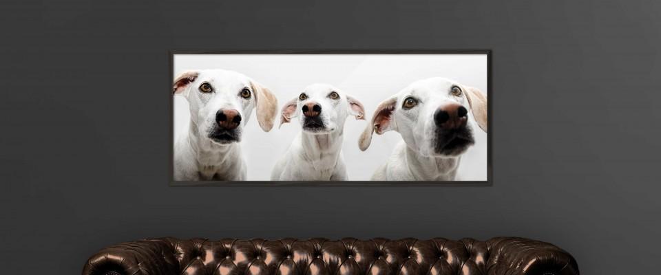 Fotos-perros1