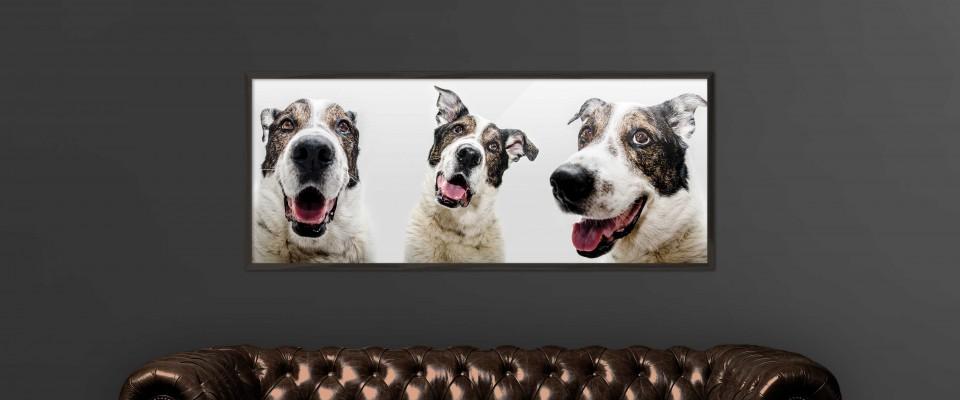 Fotos-perros2